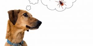 pulgas-perros